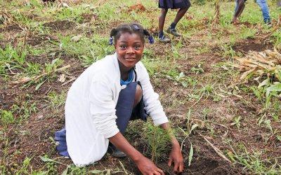 Hjelp til å lege Haitis skog